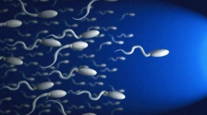 Женский рак будут лечить… сперматозоидами