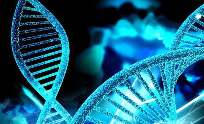 Генетические заболевания: типы, лечение и диагностика