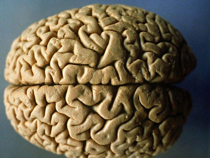 Размер мозга влияет на возникновение рака