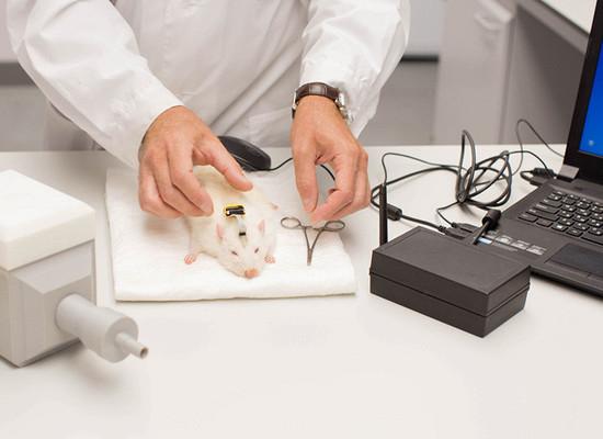 Ученые научили крыс диагностировать рак