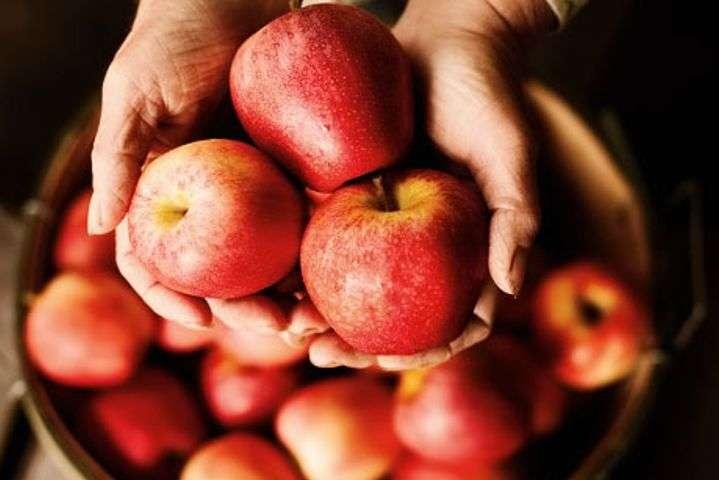 Яблоки эффективно защищают от рака кишечника
