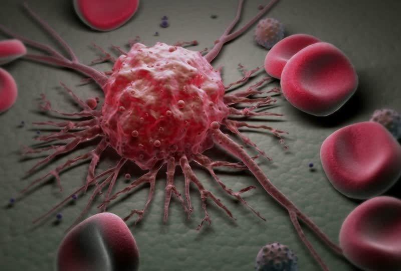 Организм способен «съедать» раковые клетки