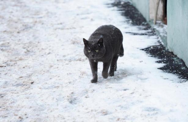 Бездомные коты способны вылечить рак