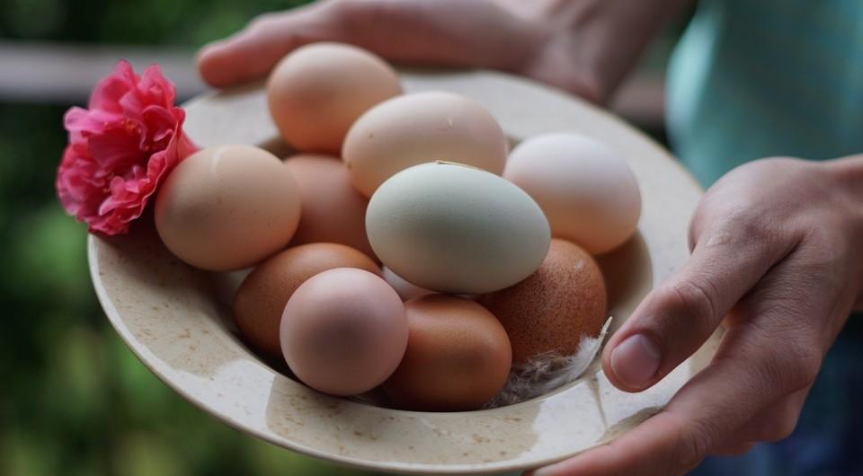 Ученые нашли способ получения лекарства от рака из яиц