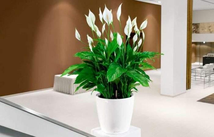 Комнатные растения по фен-шуй для привлечения любви