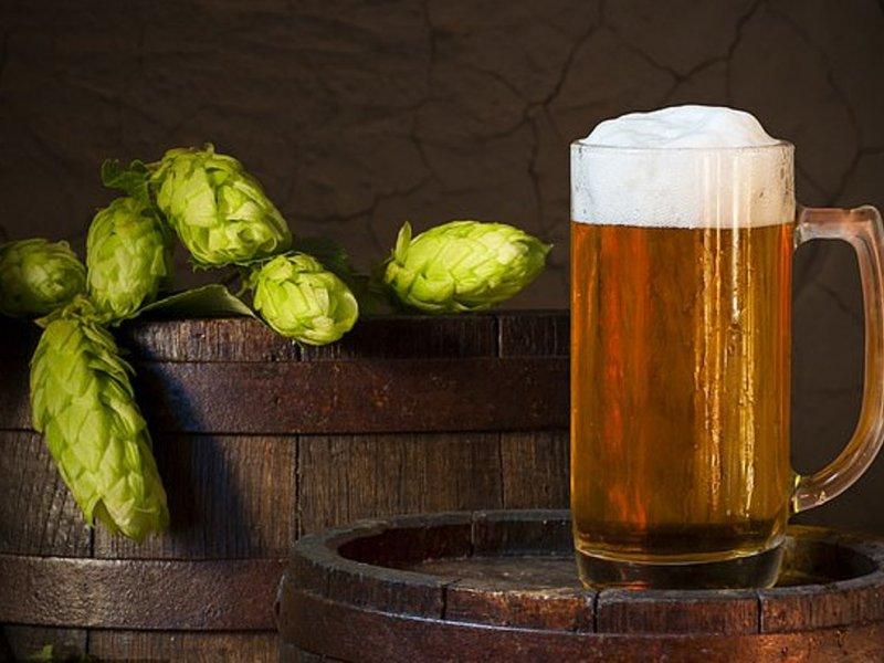 Хмель из пива может бороться с опухолями печени и кишечника