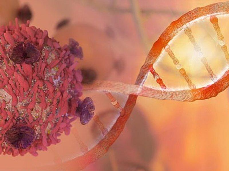 Новая комбинация лекарств уменьшила опухоли легких