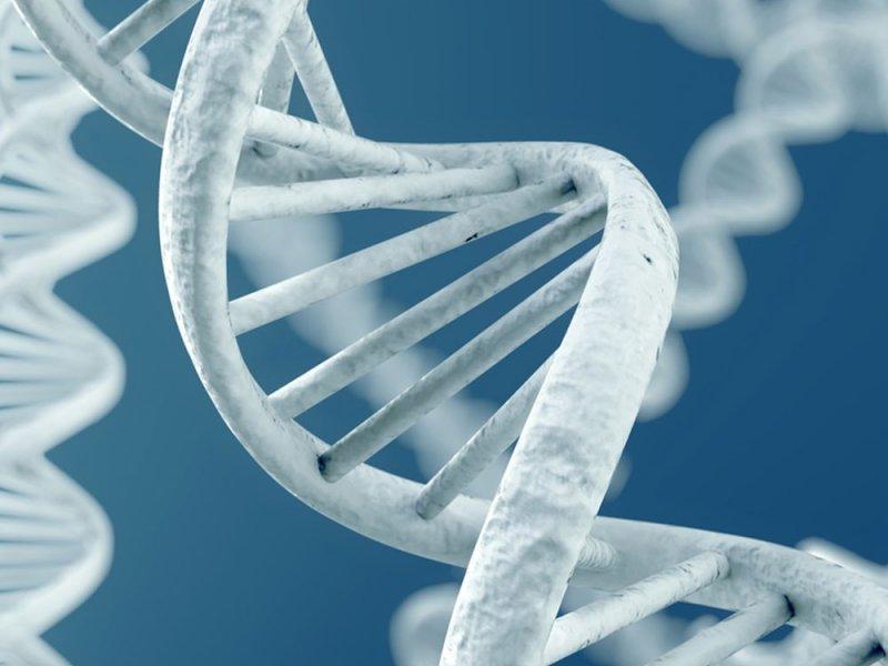 На риск развития множественной миеломы может указывать перестановка ДНК