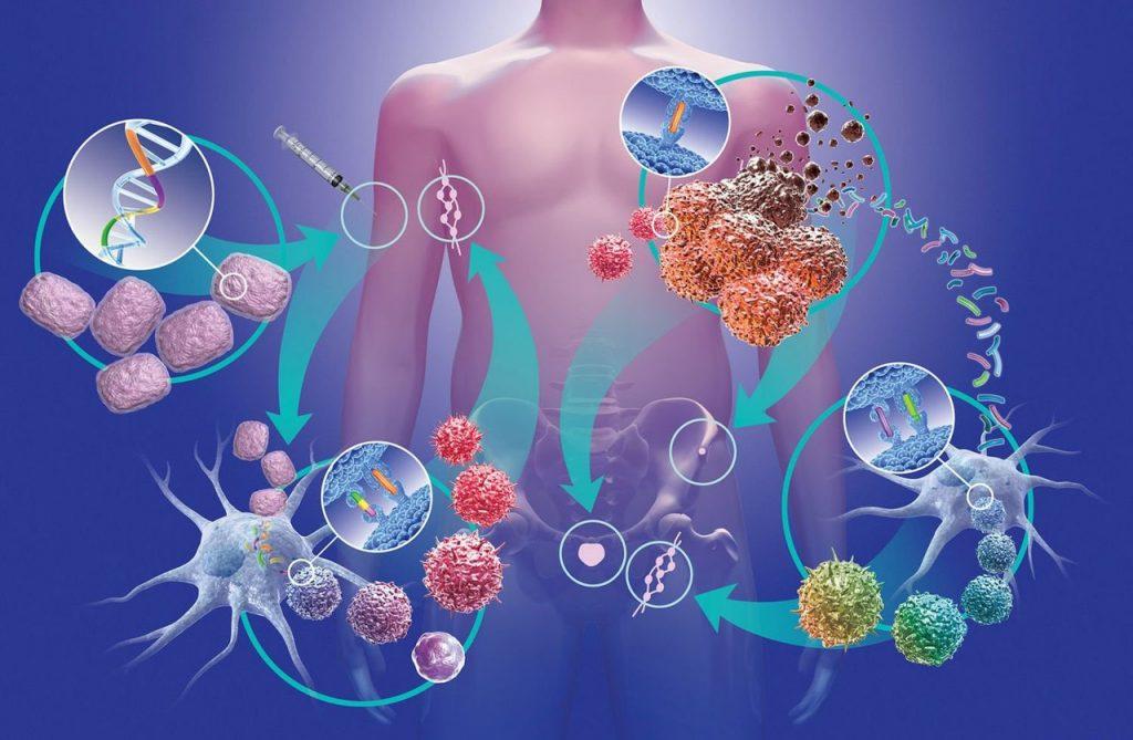 Один из методов борьбы с раком — иммунотерапия. Как это работает?
