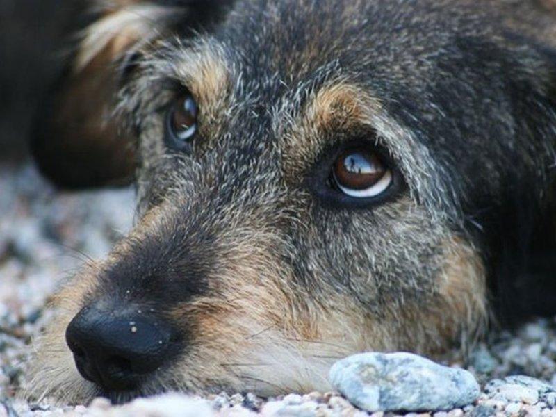 Идеальные диагносты: собаки определяют рак легких с точностью 97%