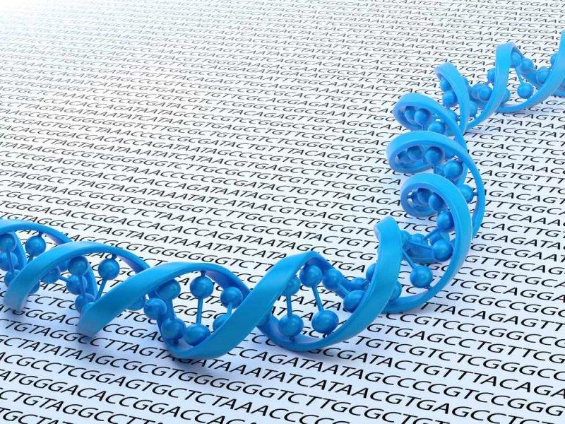 Способ лечения рака простаты предскажет тест ДНК