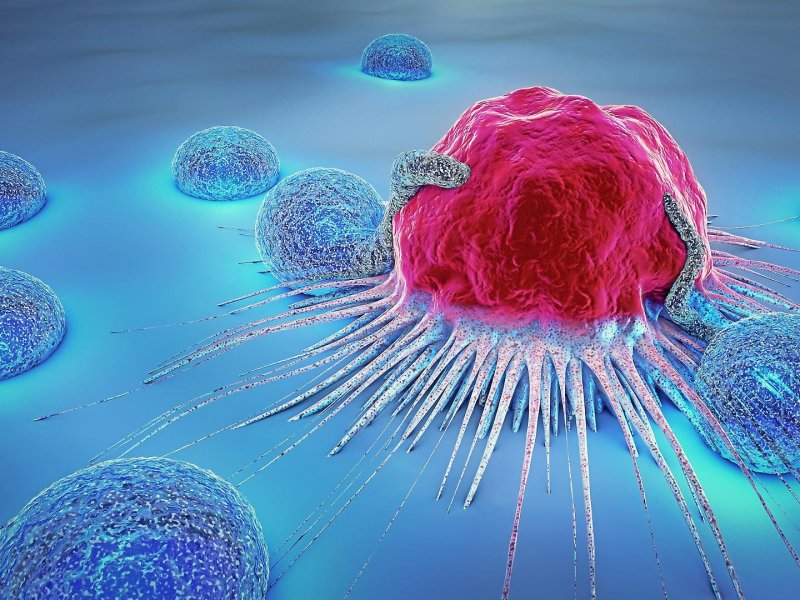 Ученые из Санкт-Петербурга выращивают раковые опухоли