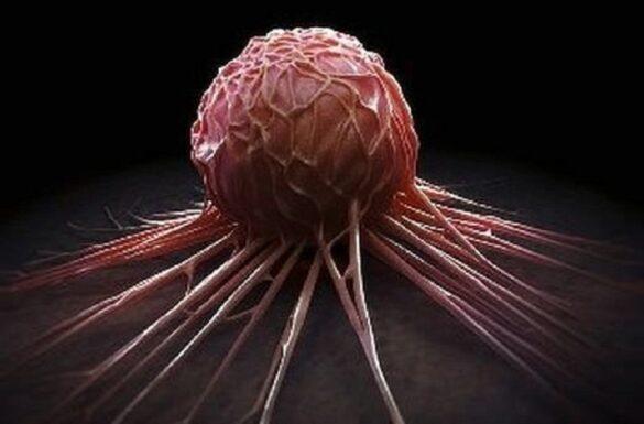 Создан препарат, блокирующий рост раковых опухолей