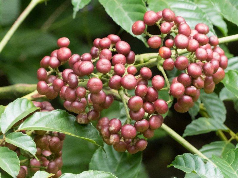 Можно ли вылечить рак растениями? У ученых неоднозначные результаты