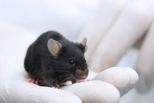 Грызуны помогли создать уникальную систему диагностирования рака