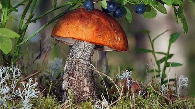 Употребление грибов может предотвратить рак