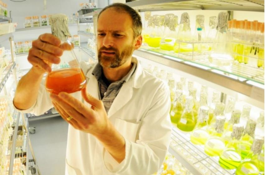 Найдено растение, которое успешно борется с раком