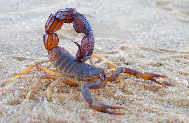 Ученые создали лекарство от рака из яда скорпиона
