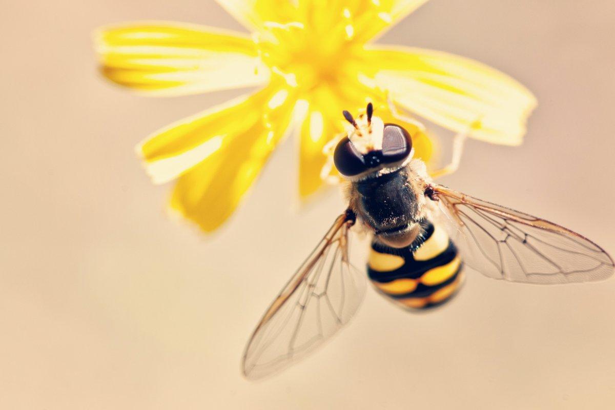 В пчелином яде обнаружили лекарство от рака груди