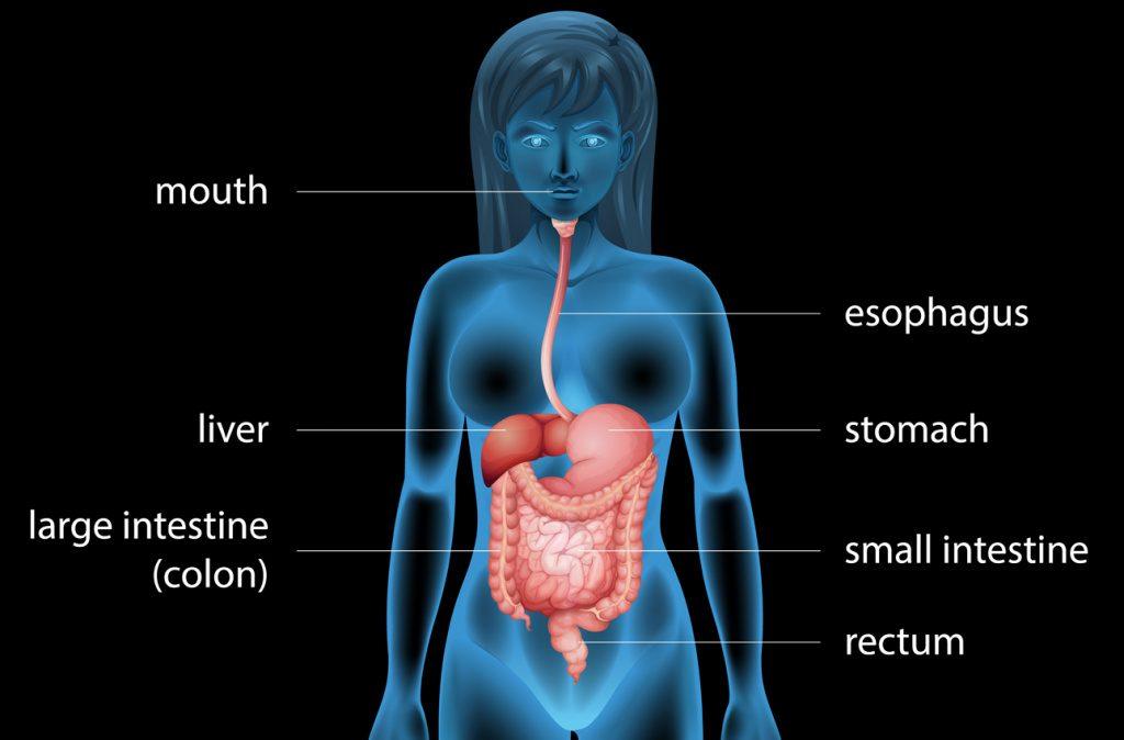 Методы очистки желудка в домашних условиях