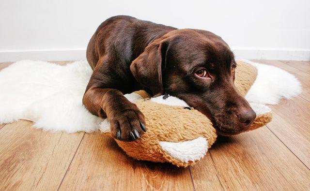 Собаки помогают побеждать лейкозы