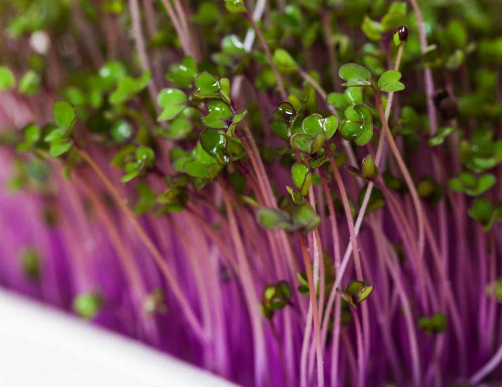 4 вида семян для борьбы с раком
