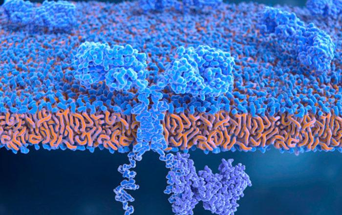 Создан новый способ диагностики рака